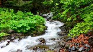 The Milky Falls. Abkhazia